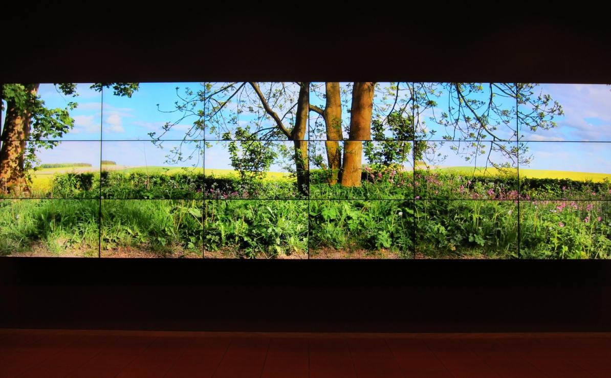 David Hockney, a bigger picture, Museum Ludwig Köln, Tanja Maria Ernst