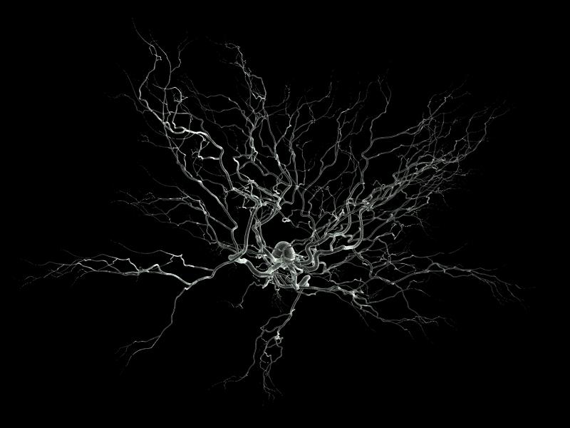 Neurosciences_ ⓒ Nicolas P. Roulier_ Wikimedia