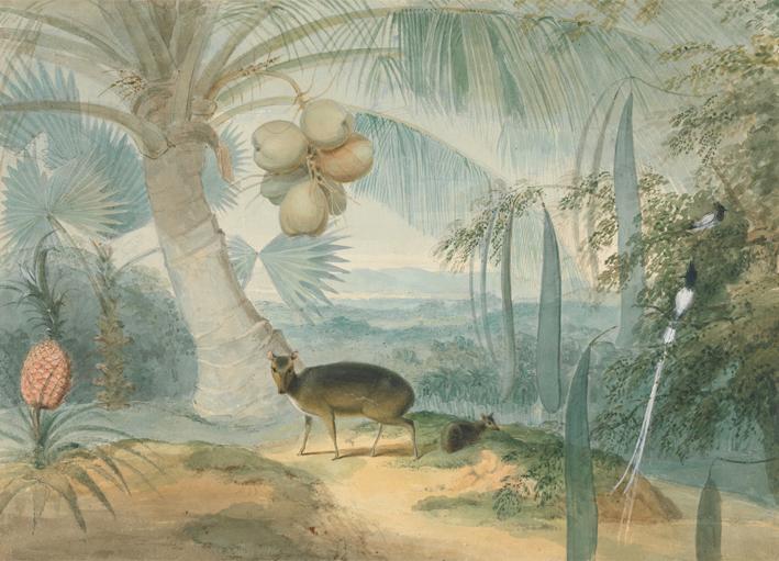 A_Landscape_in_Ceylon_by_Samuel_Daniell
