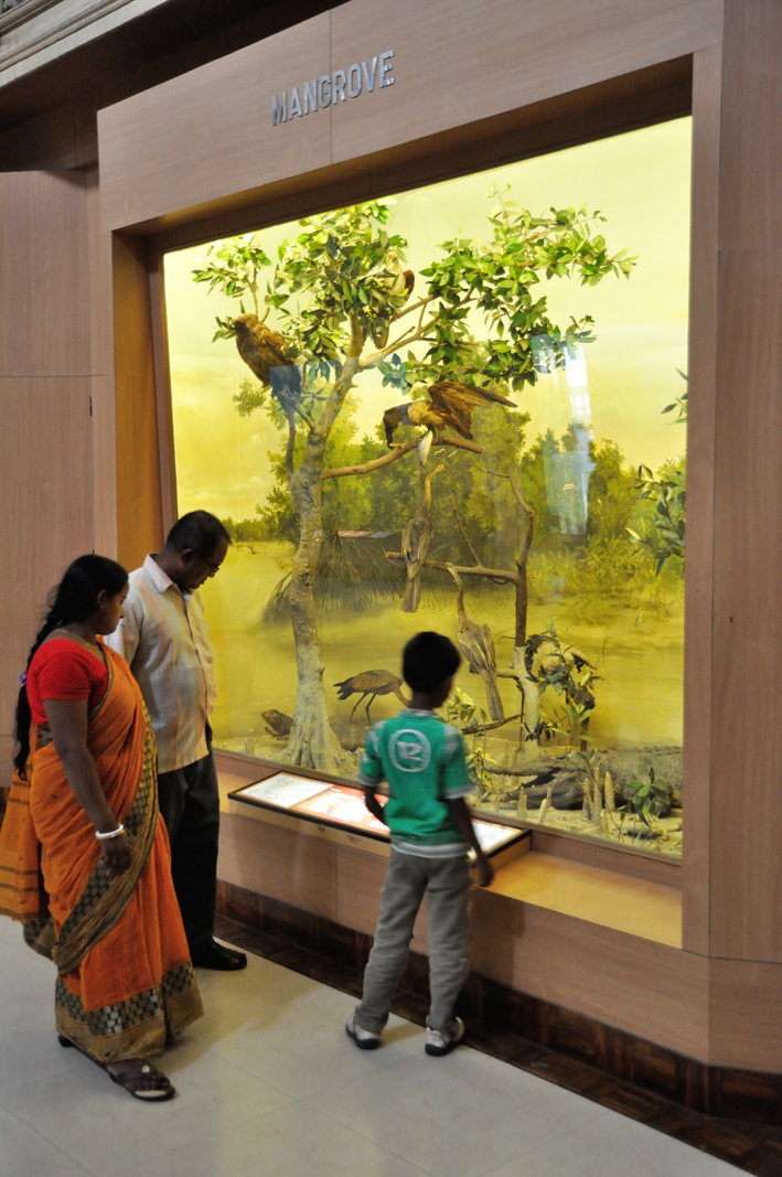 Diorama_-_Mangrove_-_Zoological_Gallery_-_Indian_Museum_-_Kolkata_2014-04-04_4386